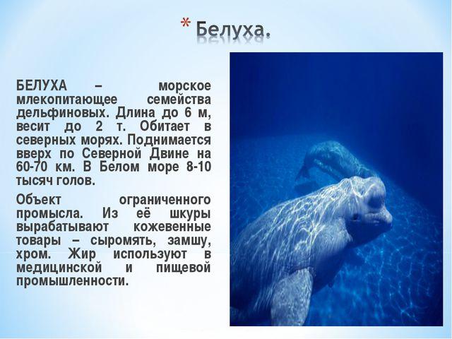 БЕЛУХА – морское млекопитающее семейства дельфиновых. Длина до 6 м, весит до...