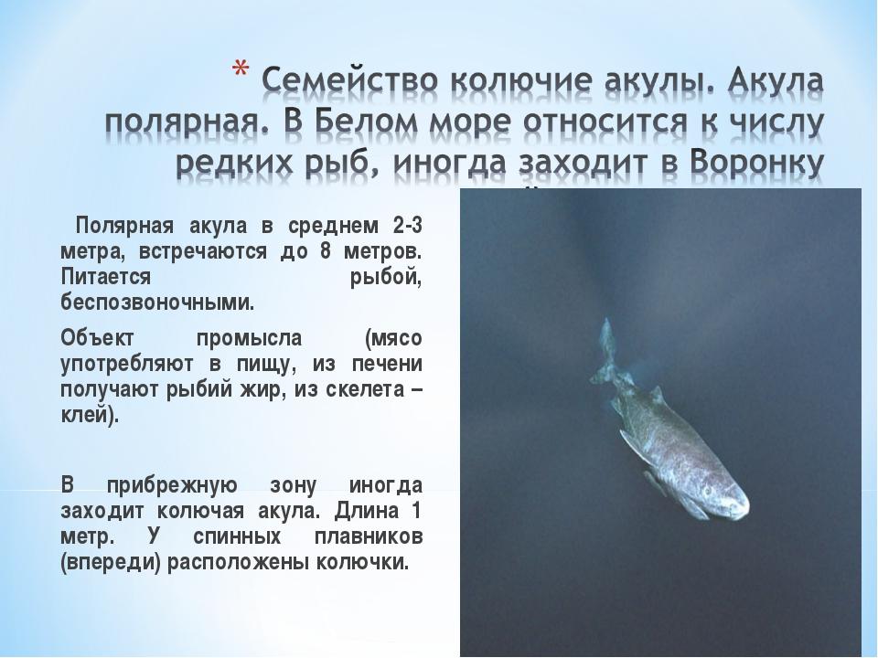 Полярная акула в среднем 2-3 метра, встречаются до 8 метров. Питается рыбой...