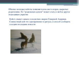 """Обычно молодые койоты появляются на свет в норах, вырытых родителями. Но """"род"""