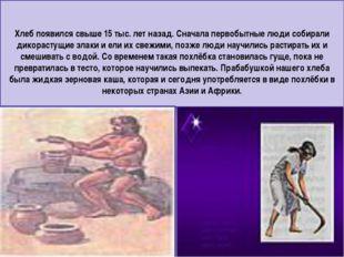 Хлеб появился свыше 15 тыс. лет назад. Сначала первобытные люди собирали дико