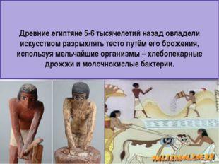 Древние египтяне 5-6 тысячелетий назад овладели искусством разрыхлять тесто п