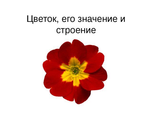 Цветок, его значение и строение