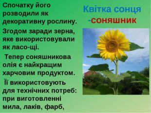 Квітка сонця -соняшник Спочатку його розводили як декоративну рослину. Згод