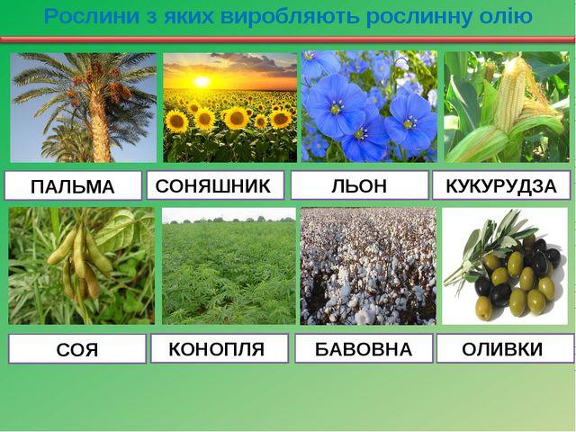 Рослини з яких виробляють рослинну олію ПАЛЬМА СОНЯШНИК ЛЬОН КУКУРУДЗА