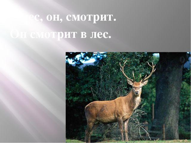 В лес, он, смотрит. Он смотрит в лес.