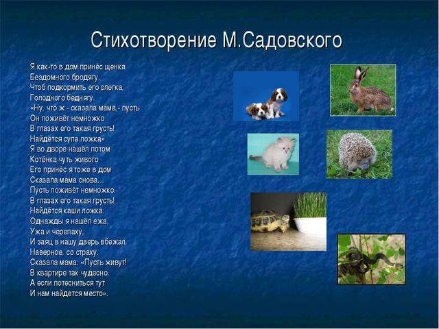 Стихотворение М.Садовского Я как-то в дом принёс щенка Бездомного бродягу, Чт...