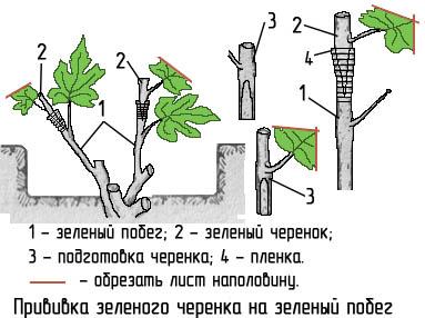 http://www.dom-dobra.su/_up/images/2013/1/4/13/1357293529.jpg