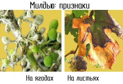 http://www.dom-dobra.su/_up/images/2012/12/13/10/1355380674.jpg
