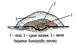 http://www.dom-dobra.su/_up/images/2013/1/11/13/1357896311.jpg