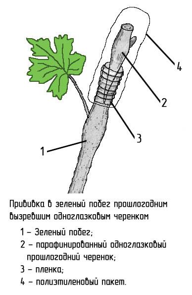 http://www.dom-dobra.su/_up/images/2013/1/4/15/1357297710.jpg