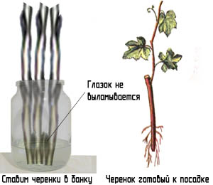 http://www.dom-dobra.su/_up/images/2012/11/28/11/1354087468.jpg
