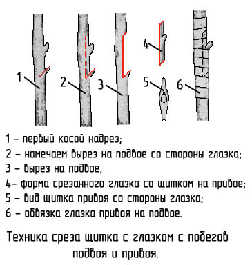 http://www.dom-dobra.su/_up/images/2013/1/4/16/1357301042.jpg
