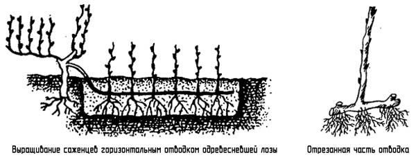 http://www.dom-dobra.su/_up/images/2012/11/26/13/1353920794.jpg