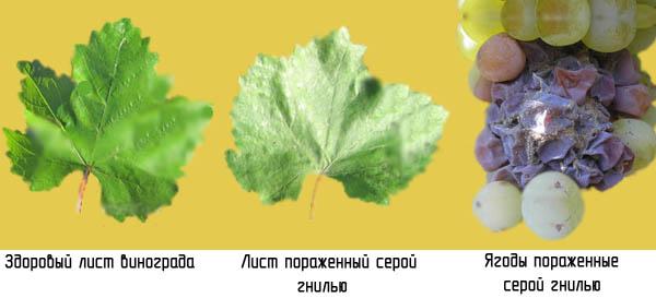 http://www.dom-dobra.su/_up/images/2012/12/13/14/1355395354.jpg