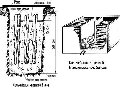 http://www.dom-dobra.su/_up/images/2012/11/27/9/1353994531.jpg
