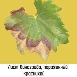 http://www.dom-dobra.su/_up/images/2012/12/13/16/1355400222.jpg