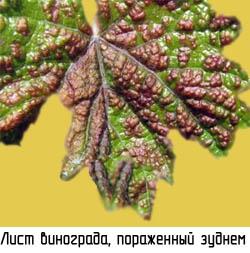 http://www.dom-dobra.su/_up/images/2012/12/13/16/1355402982.jpg