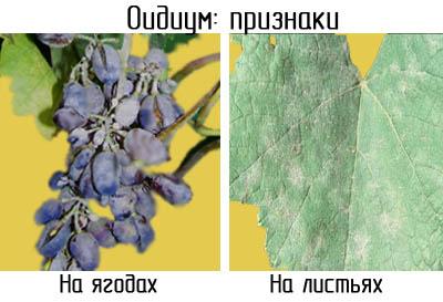http://www.dom-dobra.su/_up/images/2012/12/4/9/1354597988.jpg