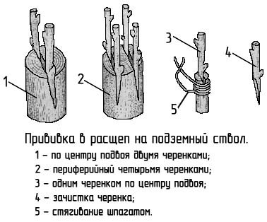 http://www.dom-dobra.su/_up/images/2012/12/26/13/1356514433.jpg