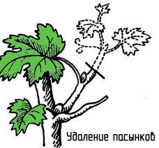 http://www.dom-dobra.su/_up/images/2012/11/30/11/1354261794.jpg