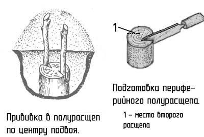 http://www.dom-dobra.su/_up/images/2012/12/26/13/1356515817.jpg