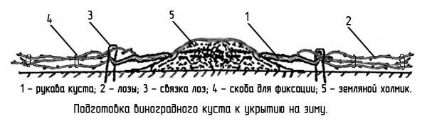http://www.dom-dobra.su/_up/images/2013/1/10/18/1357827797.jpg
