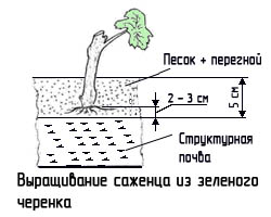 http://www.dom-dobra.su/_up/images/2012/11/26/13/1353920770.jpg