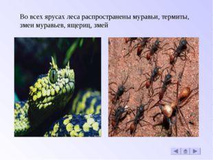 Во всех ярусах леса распространены муравьи, термиты, змеи муравьев, ящериц, з