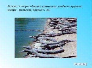 В реках и озерах обитают крокодилы, наиболее крупные из них – нильские, длино