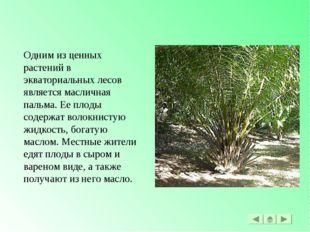 Одним из ценных растений в экваториальных лесов является масличная пальма. Ее