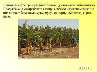 В нижнем ярусе произрастают бананы, древовидные папоротники. Плоды банана упо