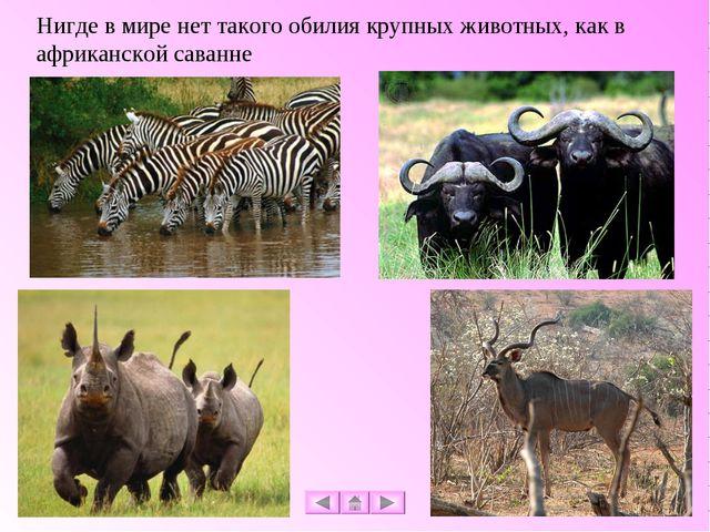 Нигде в мире нет такого обилия крупных животных, как в африканской саванне