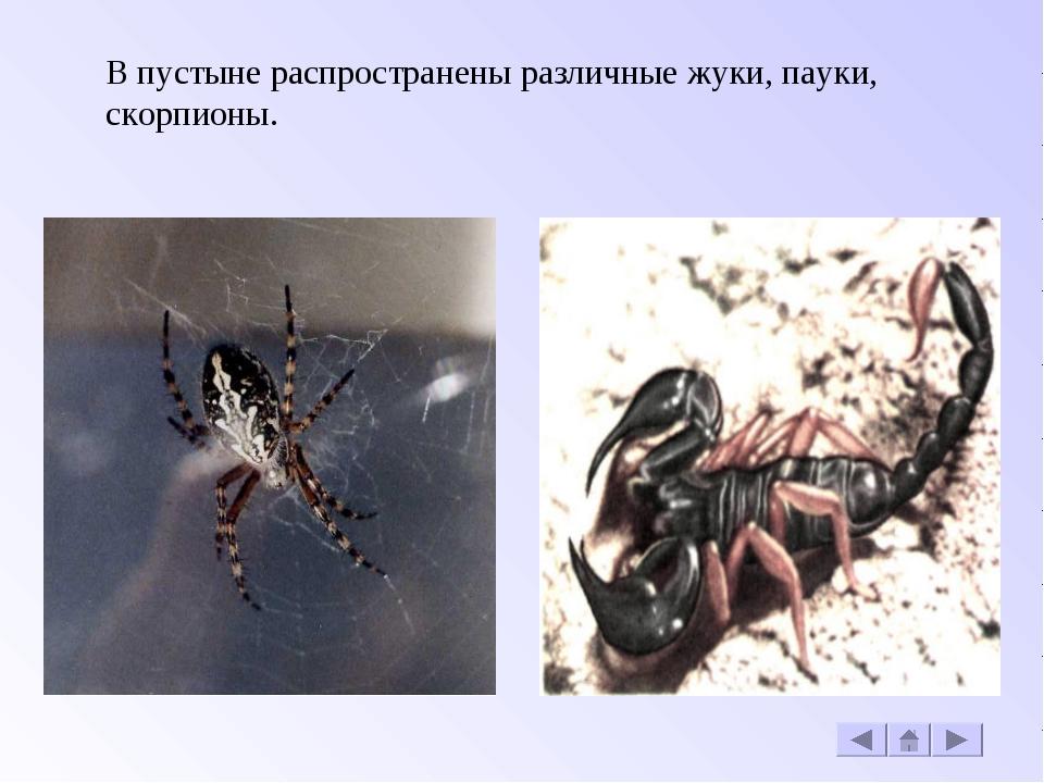 В пустыне распространены различные жуки, пауки, скорпионы.