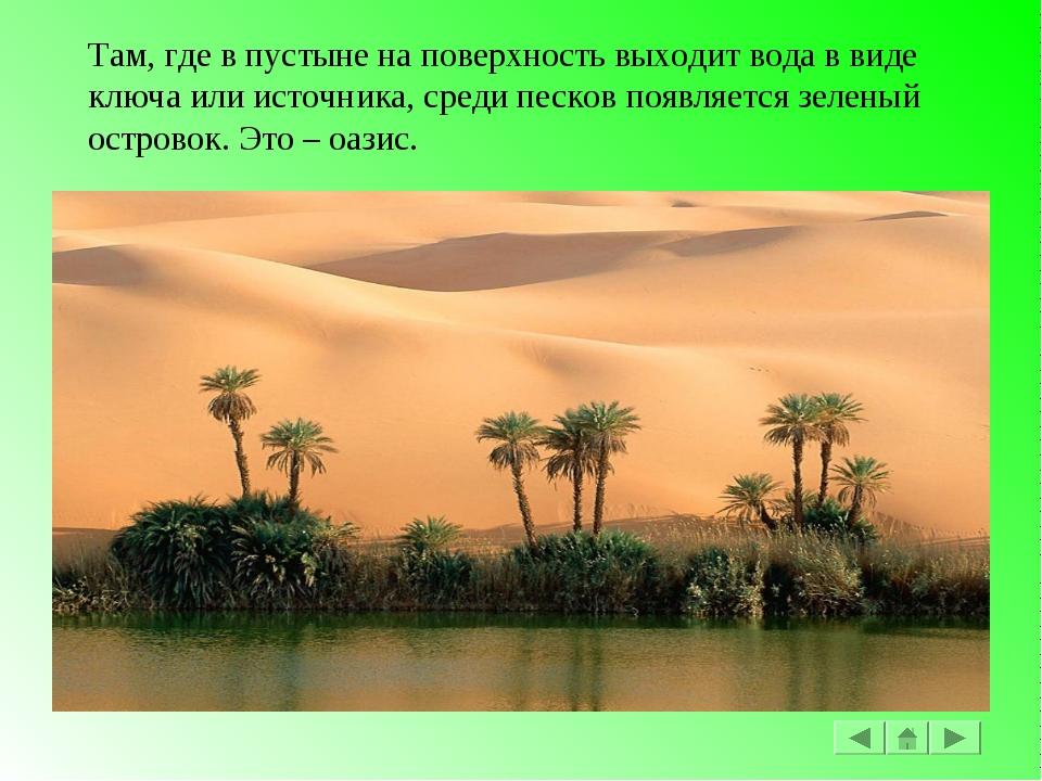 Там, где в пустыне на поверхность выходит вода в виде ключа или источника, ср...
