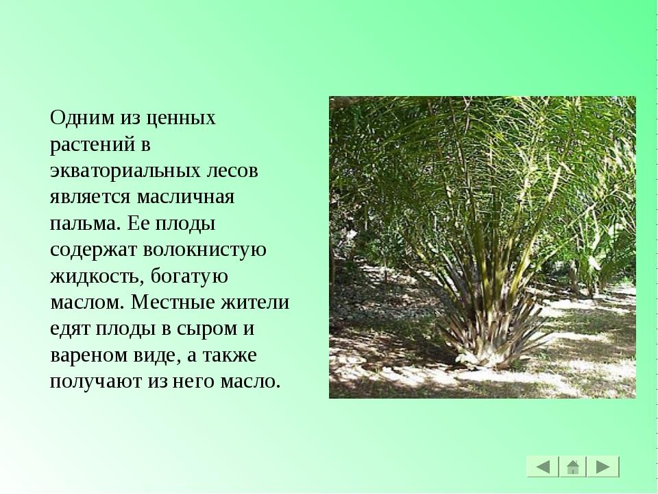 Одним из ценных растений в экваториальных лесов является масличная пальма. Ее...