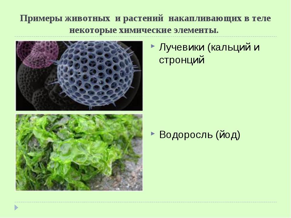 Примеры животных и растений накапливающих в теле некоторые химические элемент...