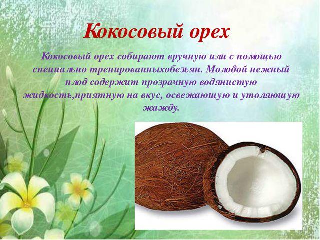Кокосовый орех Кокосовый орех собирают вручную или с помощью специально трени...