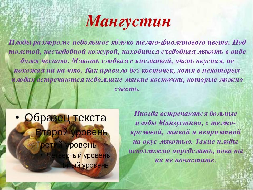 Мангустин Плоды размером с небольшое яблоко темно-фиолетового цвета. Под тол...