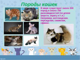 Породы кошек В мире существует около 200 пород и около 700 разновидностей (п