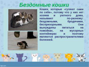 Бездомные кошки Кошек, которые «гуляют сами по себе», потому что у них нет х