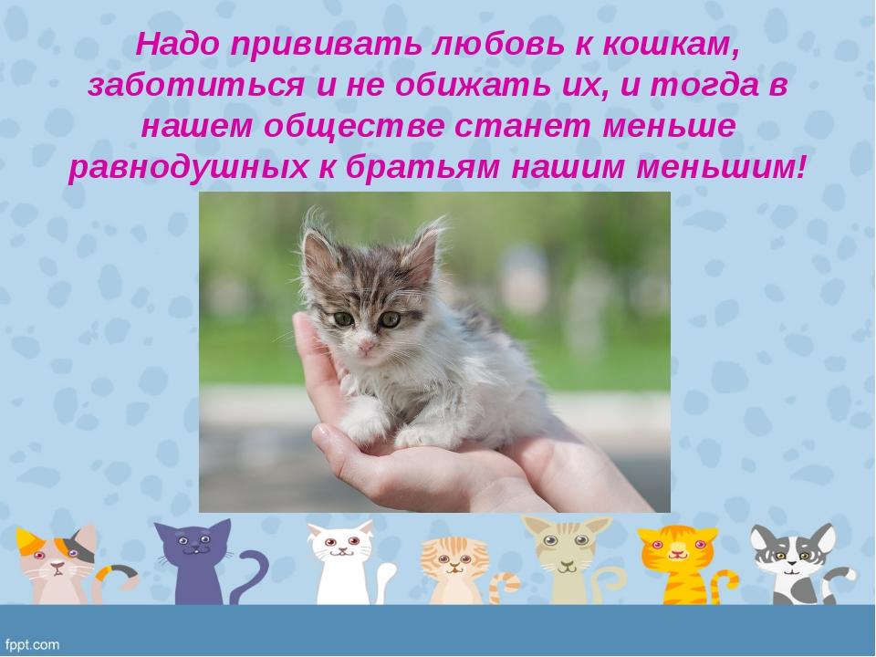 Надо прививать любовь к кошкам, заботиться и не обижать их, и тогда в нашем о...
