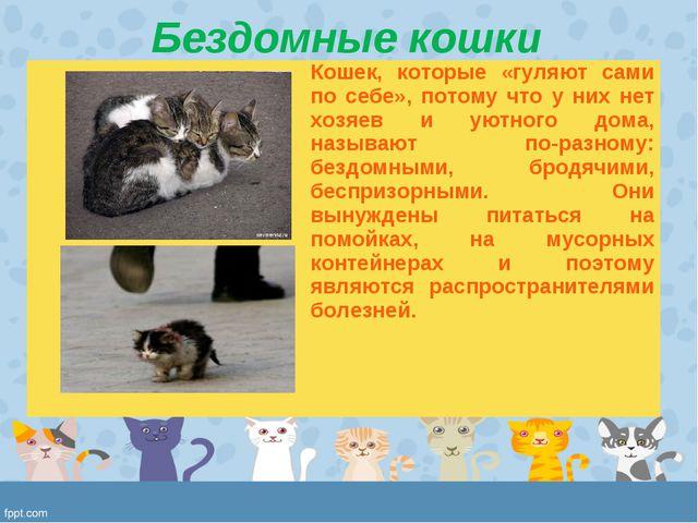 Бездомные кошки Кошек, которые «гуляют сами по себе», потому что у них нет х...