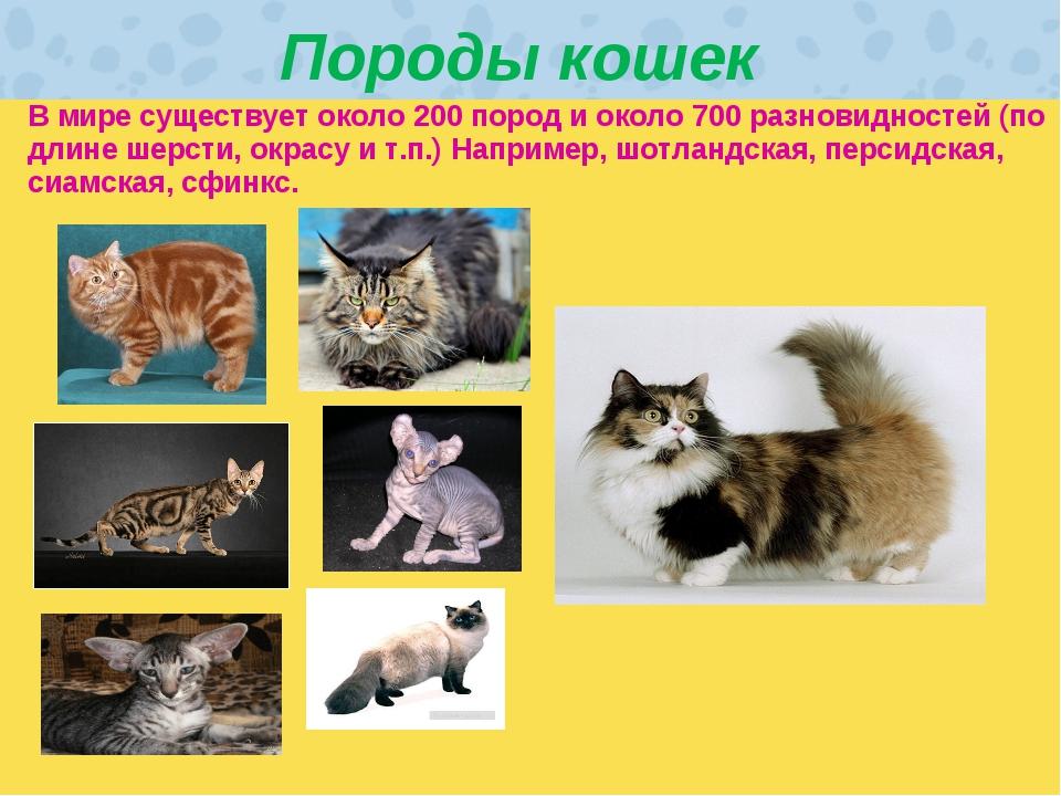 Породы кошек В мире существует около 200 пород и около 700 разновидностей (п...