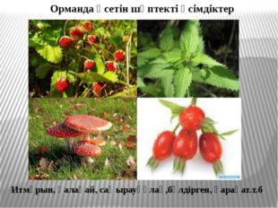 Орманда өсетін шөптекті өсімдіктер Итмұрын, қалақай, саңырауқұлақ,бүлдірген,