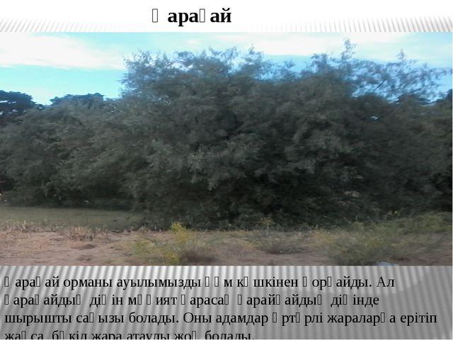 Қарағай орманы ауылымызды құм көшкінен қорғайды. Ал қарағайдың діңін мұқият қ...