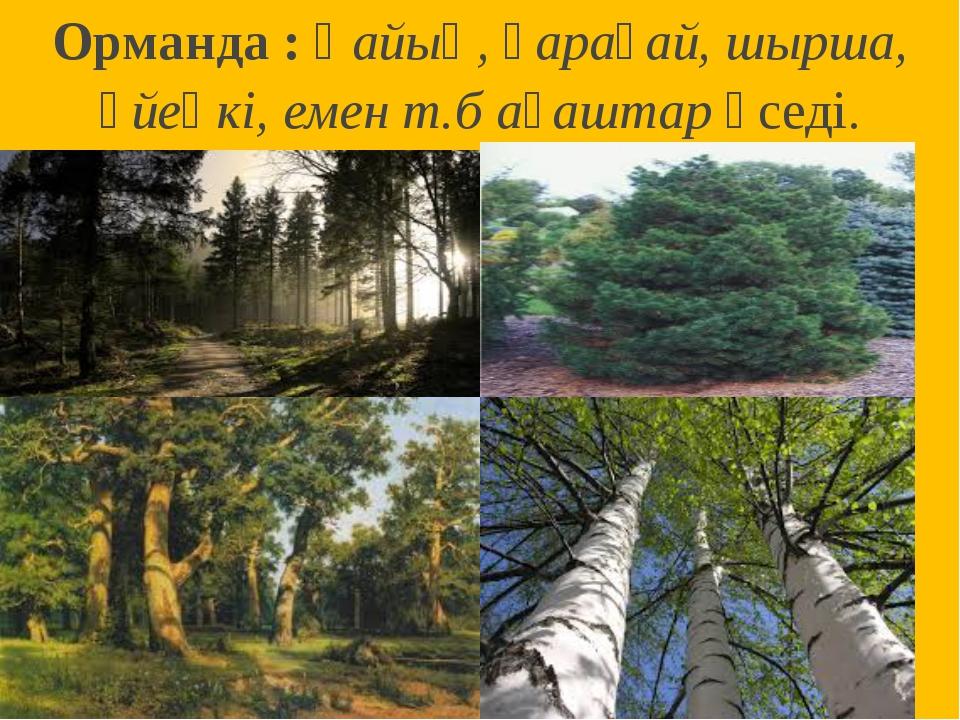 Орманда : Қайың, қарағай, шырша, үйеңкі, емен т.б ағаштар өседі.