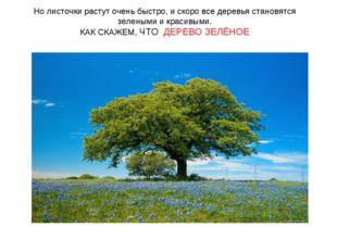 Но листочки растут очень быстро, и скоро все деревья становятся зелеными и кр