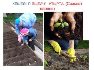 КЕШЕЛӘР ЯШЕЛЧӘ УТЫРТА. (Сажают овощи.)