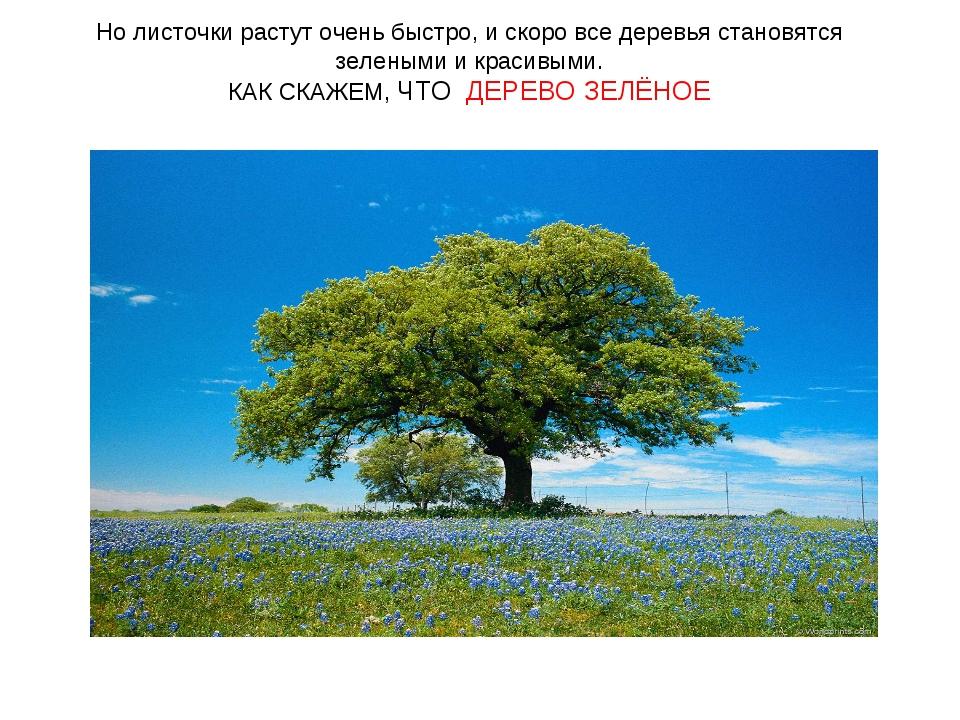 Но листочки растут очень быстро, и скоро все деревья становятся зелеными и кр...