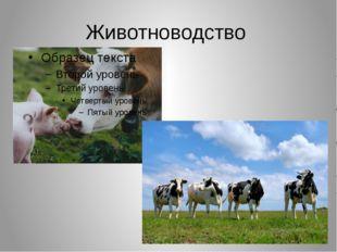 Животноводство разведение крупного рогатого скота и свиней